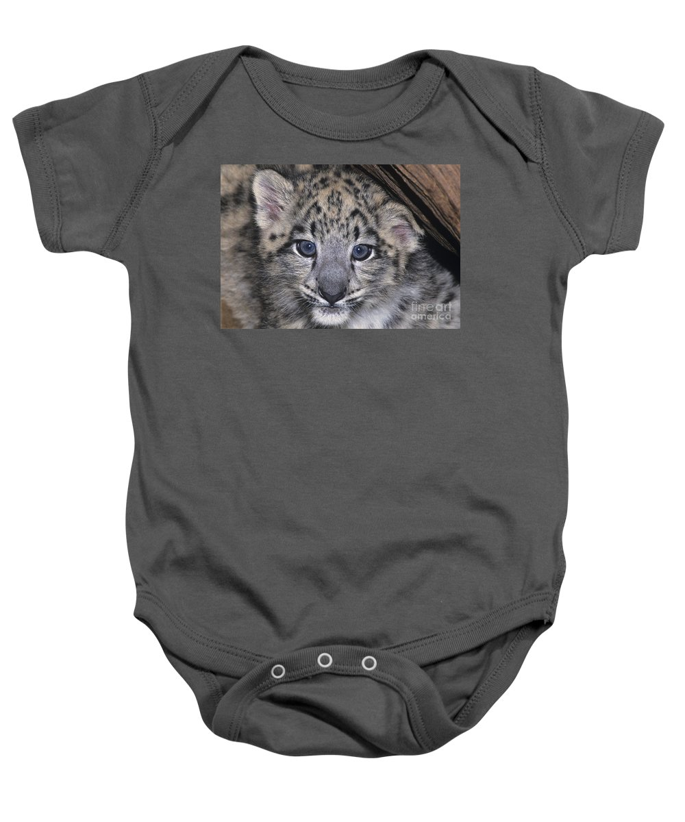 Asia Baby Onesie featuring the photograph Snow Leopard Cub Endangered by Dave Welling