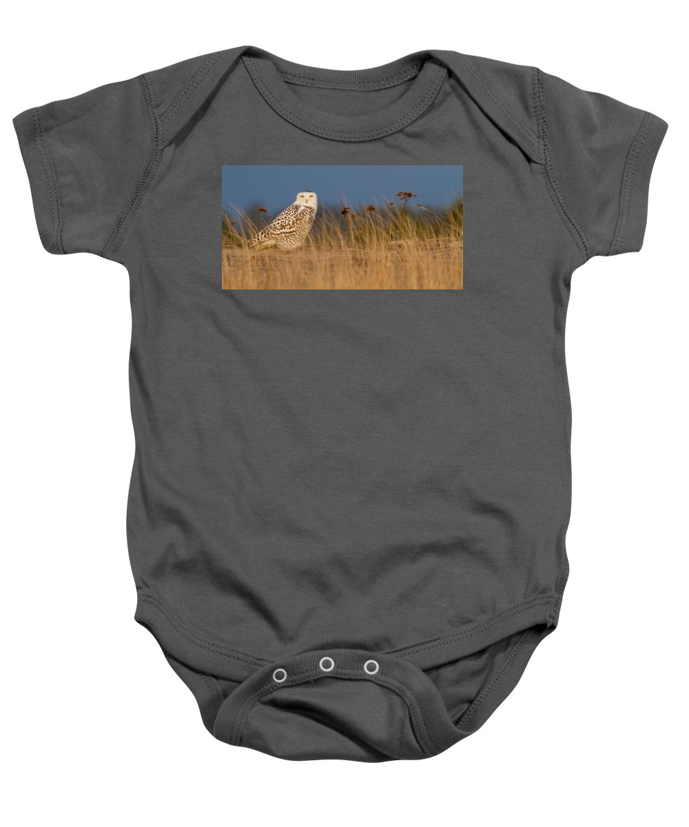 Snowy Owl Baby Onesie featuring the photograph Snowy Owl Morning by Max Waugh