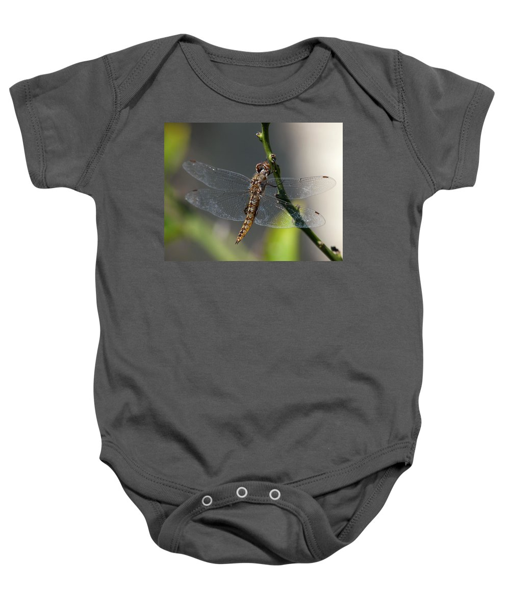 Dragonfly Baby Onesie featuring the photograph Soaking Rays by Joe Schofield