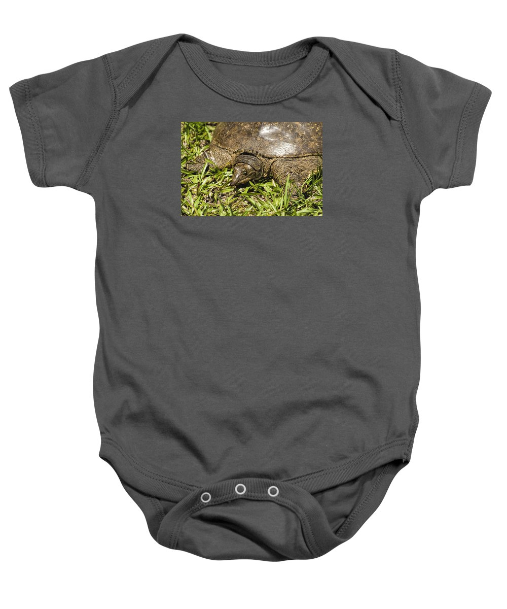 Florida Softshell Turtle Baby Onesie featuring the photograph Florida Soft Shelled Turtle - Apalone Ferox by Kathy Clark