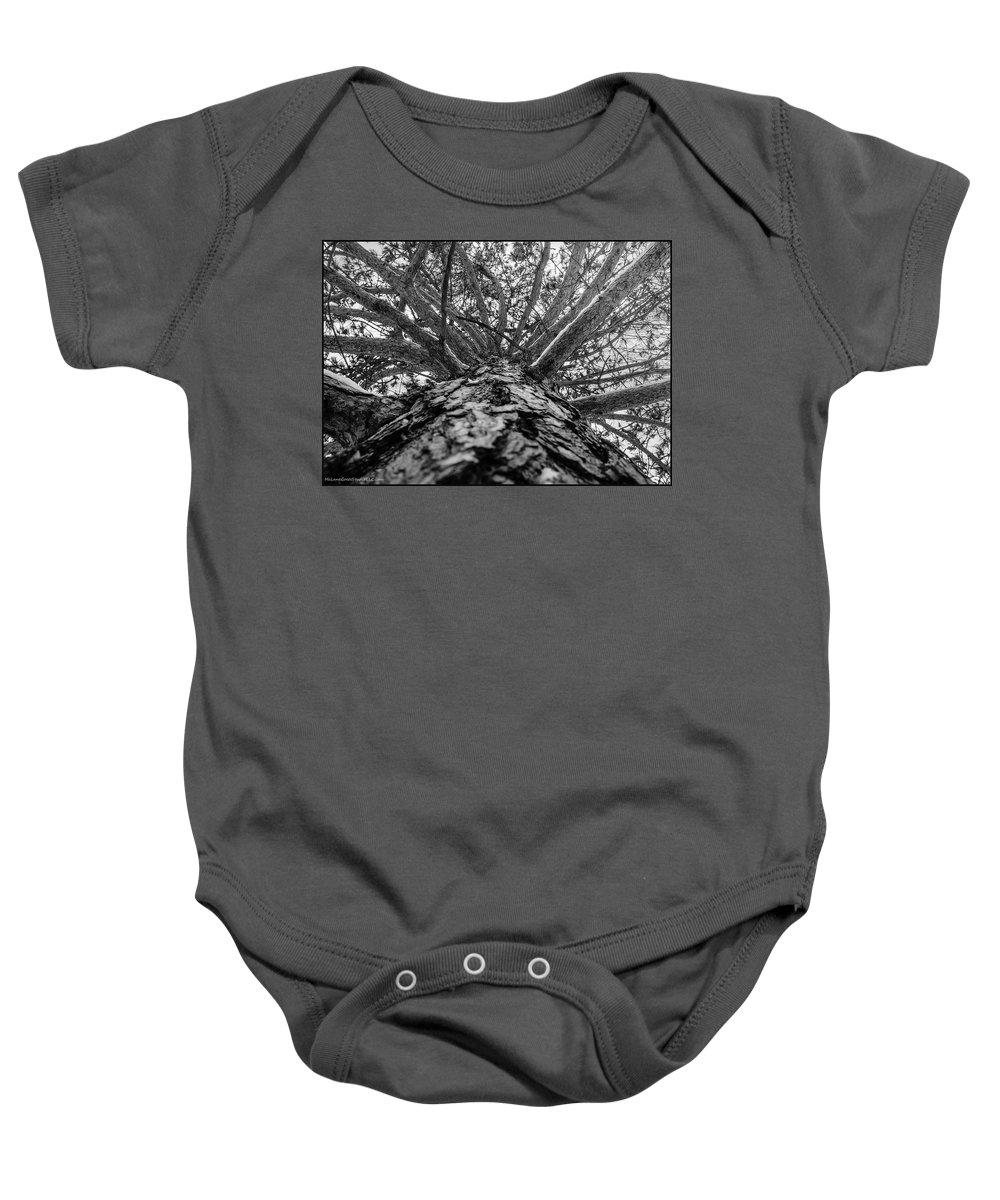 Usa Baby Onesie featuring the photograph Squirrels View Looking Up by LeeAnn McLaneGoetz McLaneGoetzStudioLLCcom