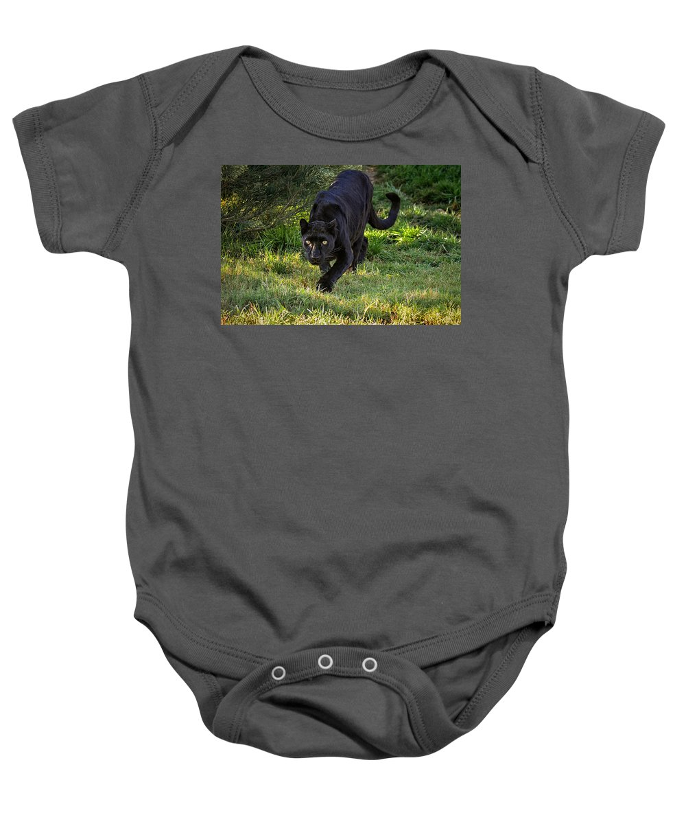Panther Baby Onesie featuring the photograph Stalking Leopard by Evelyn Harrison