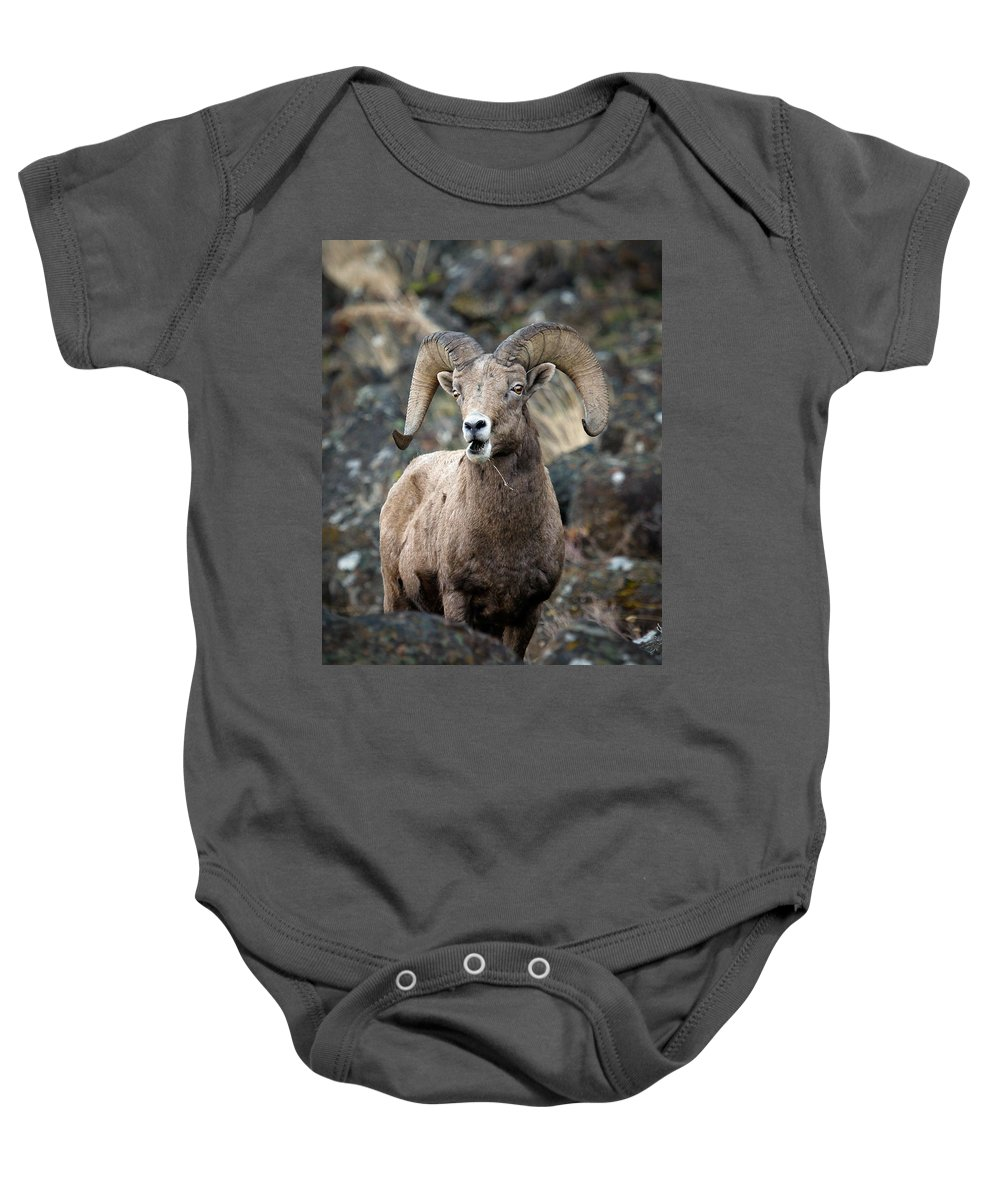 Ram Baby Onesie featuring the photograph Startled Ram by Steve McKinzie