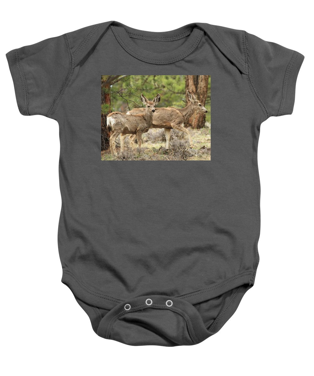 Rocky Mountain National Park Baby Onesie featuring the photograph Strolling Through The Rockies by Adam Jewell