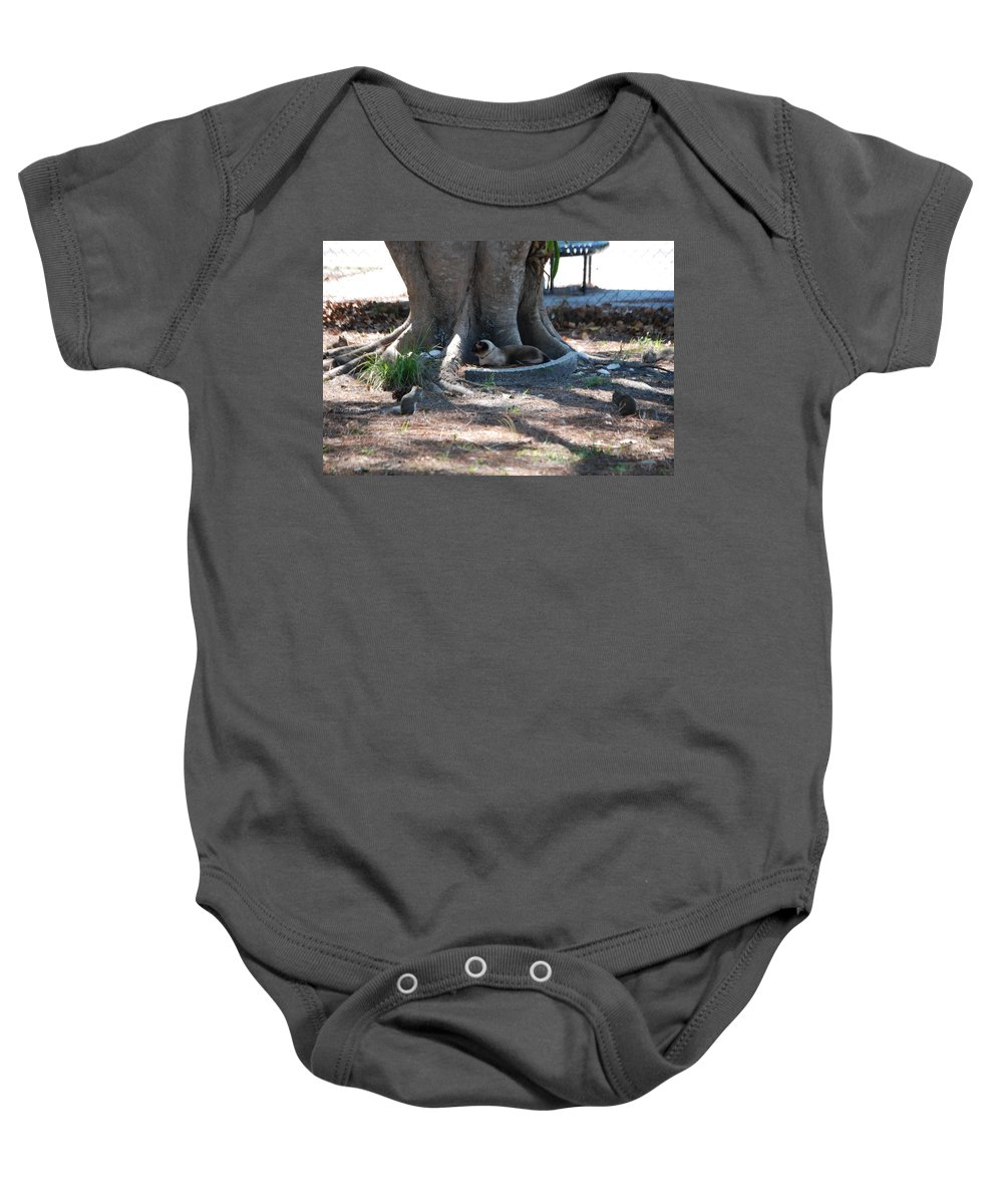 Cat Has Four Squirrels Around Him Baby Onesie featuring the photograph Surrounded by Robert Floyd