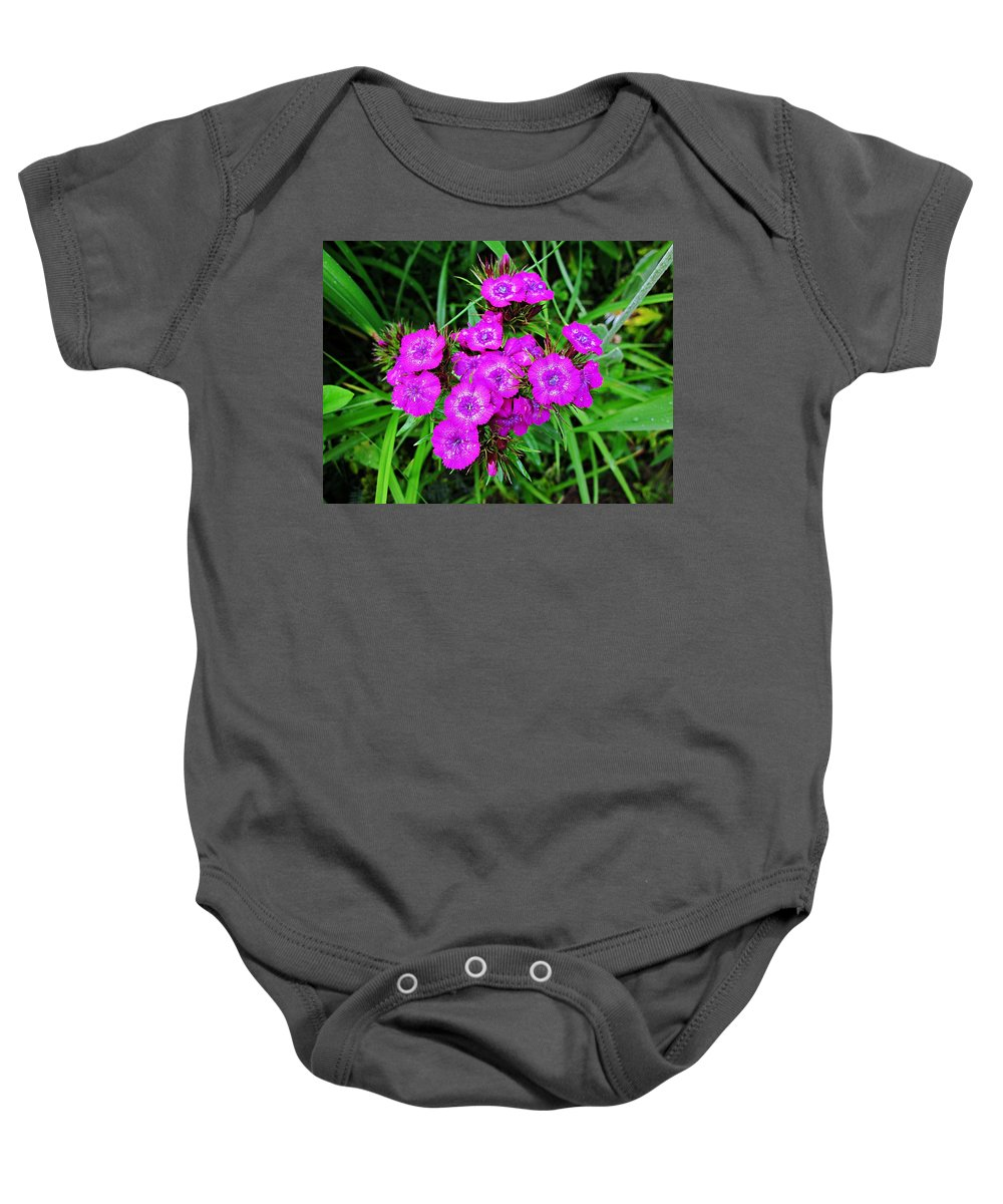 Sweet Williams Baby Onesie featuring the photograph Sweet William by MTBobbins Photography