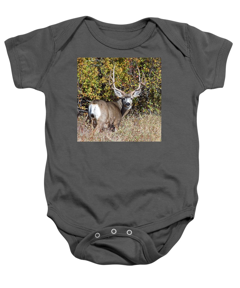 Mule Deer Baby Onesie featuring the photograph Tall And Handsome by Jack Bell