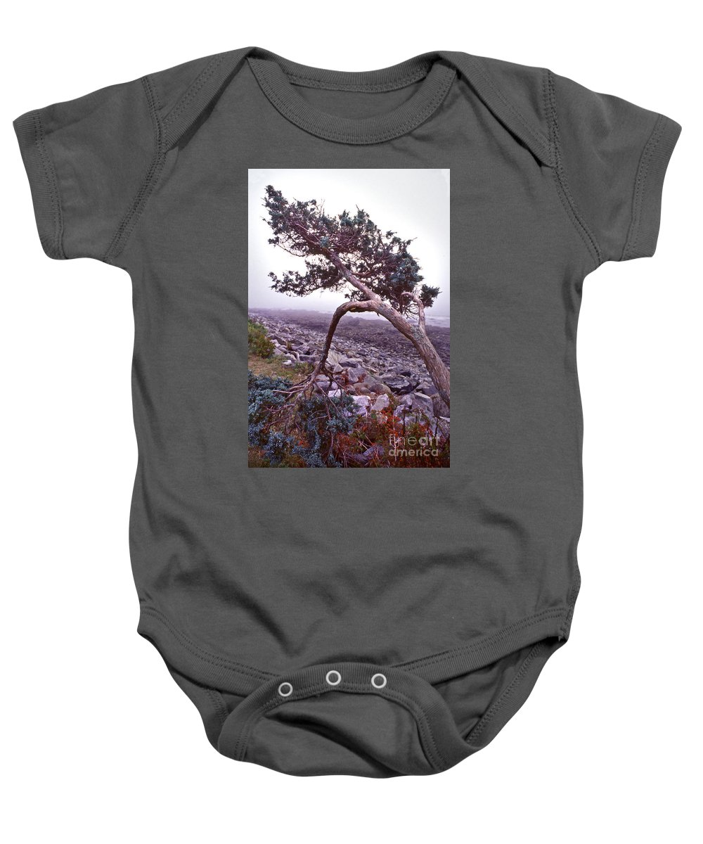 Scenic Tours Baby Onesie featuring the photograph Tenacity by Skip Willits