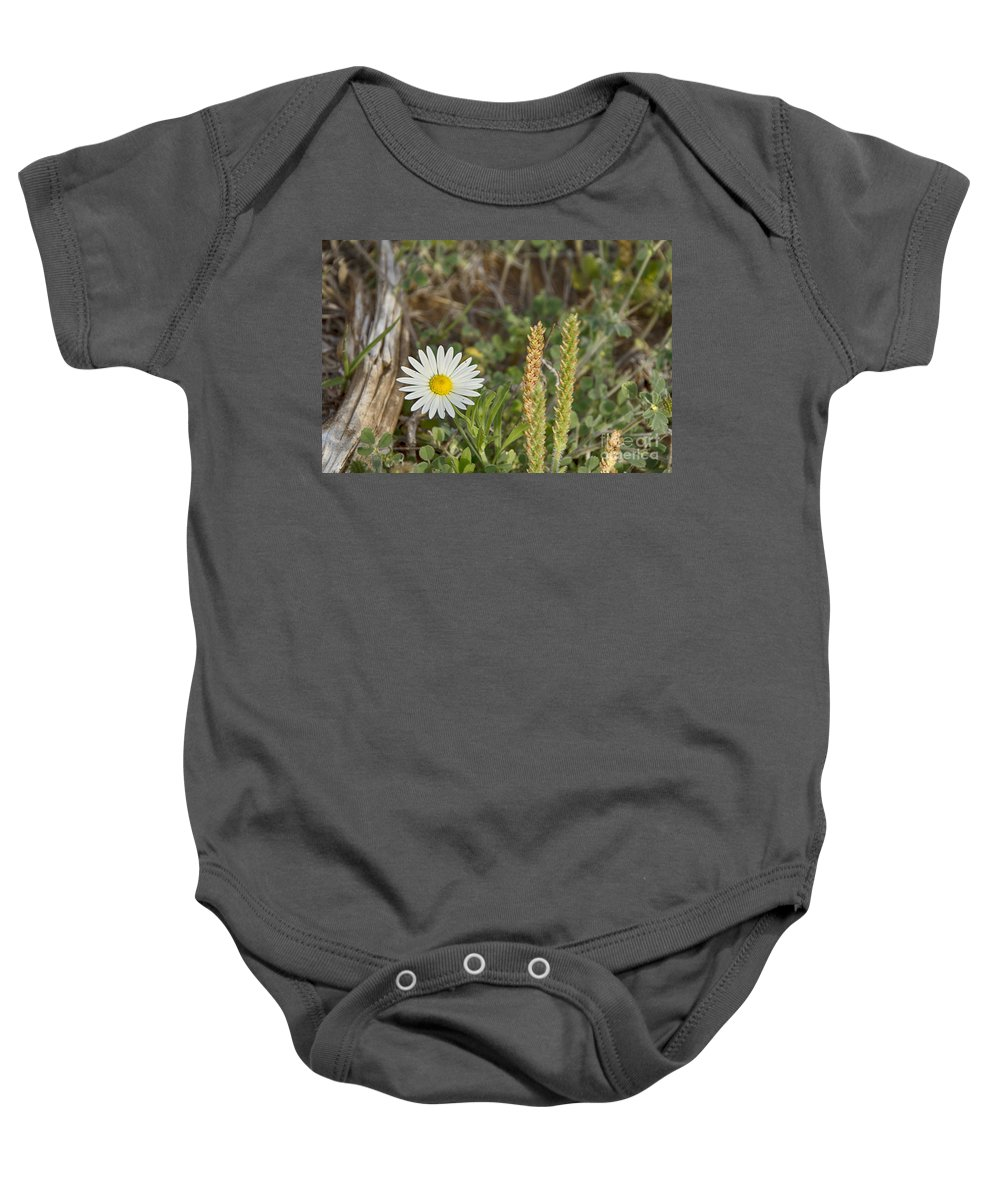 Wildflowers Baby Onesie featuring the photograph Texas Wildflowers V5 by Douglas Barnard