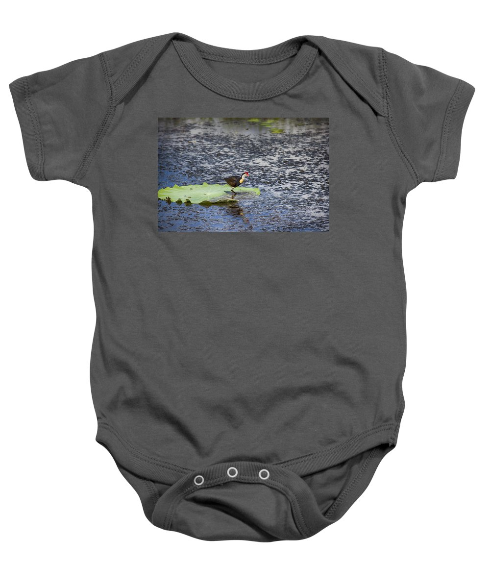 Esus Christ Bird Baby Onesie featuring the photograph That Sinking Feeling by Douglas Barnard