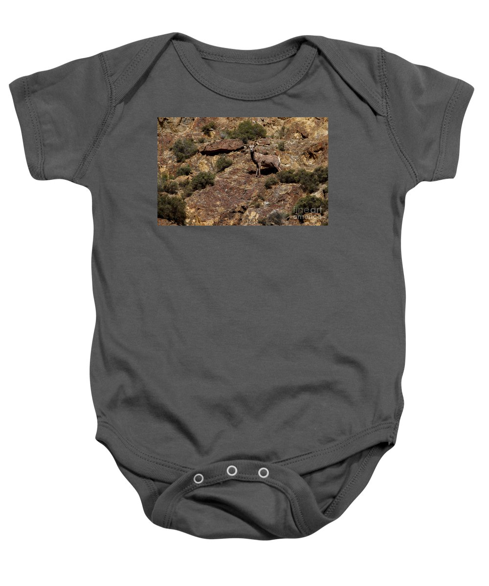 Sheep Baby Onesie featuring the photograph The Bighorn Uwe by Robert Bales