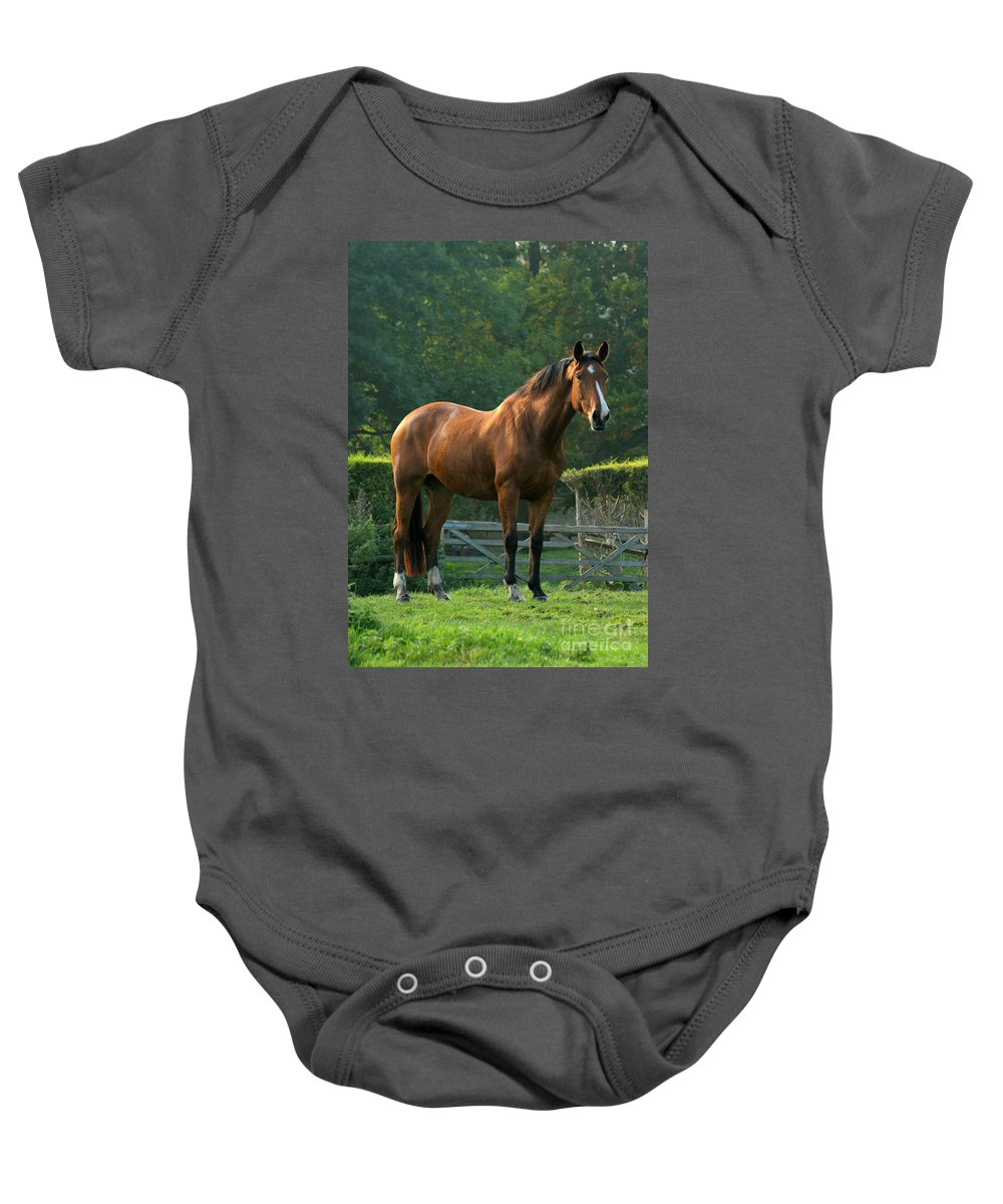 Horse Baby Onesie featuring the photograph The Observer by Angel Ciesniarska