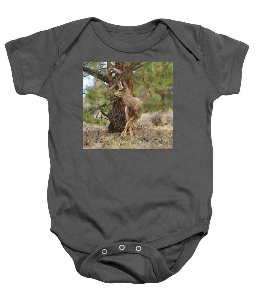 Rocky Mountain National Park Baby Onesie featuring the photograph The Rudolph Dance by Adam Jewell