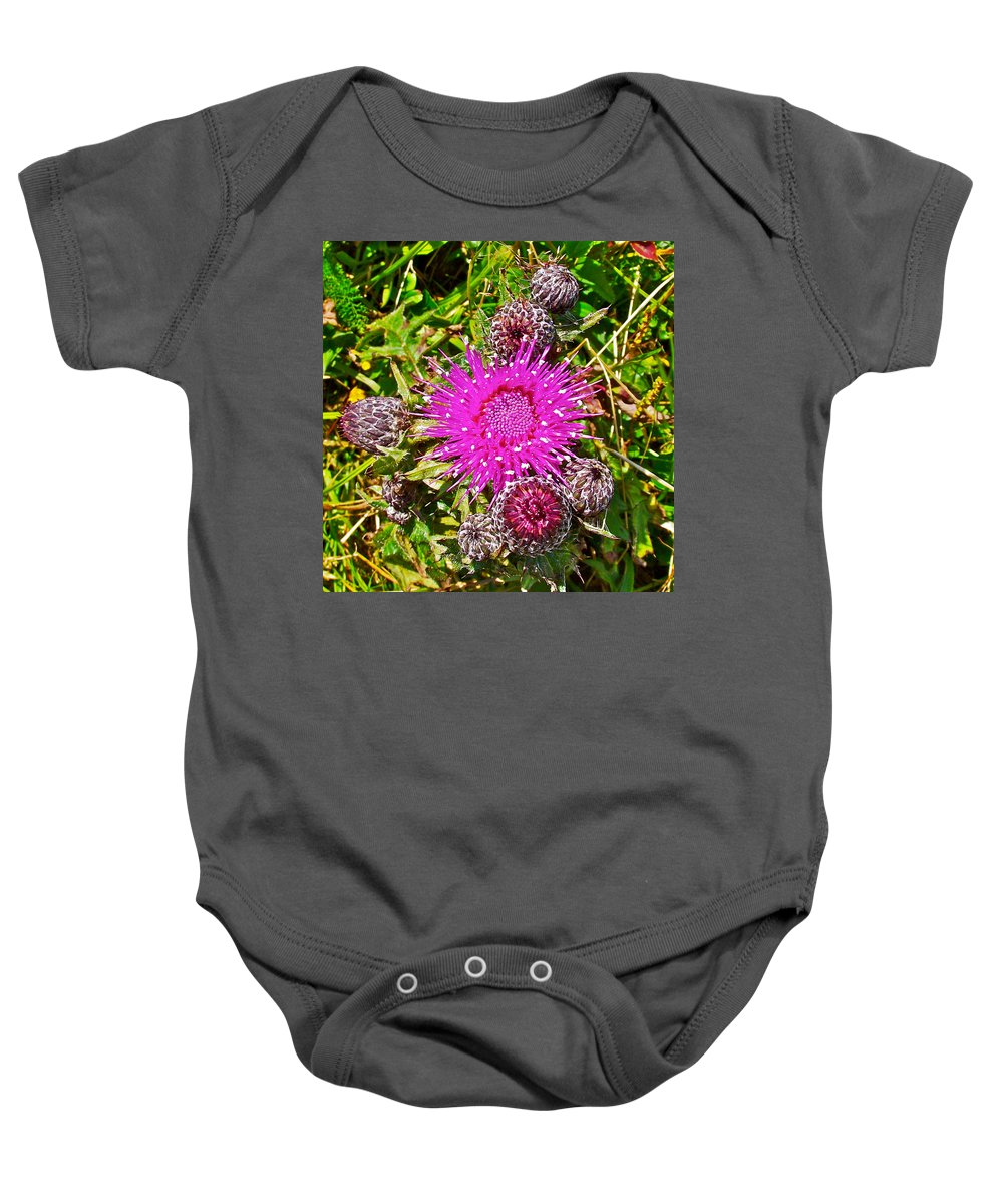 Thistle In Saint Mary's Ecological Reserve Baby Onesie featuring the photograph Thistle In Saint Mary's Ecological Reserve-newfoundland by Ruth Hager