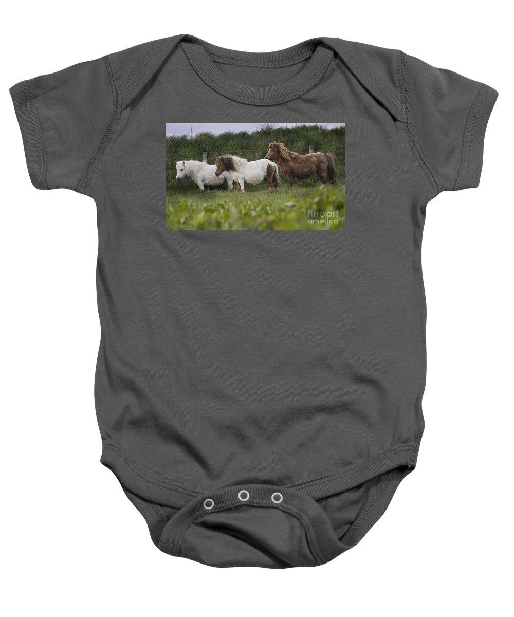 Shetland Baby Onesie featuring the photograph Three Ponies by Angel Tarantella