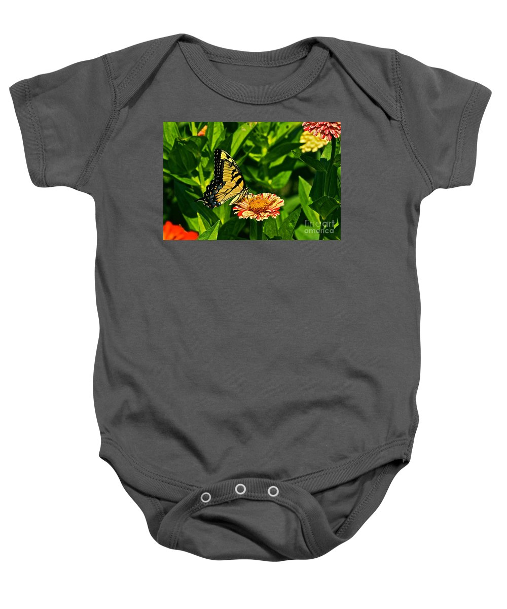 Female Tiger Swallowtail And Zinnia Baby Onesie featuring the photograph Tiger Swallowtail And Peppermint Stick Zinnias by Byron Varvarigos