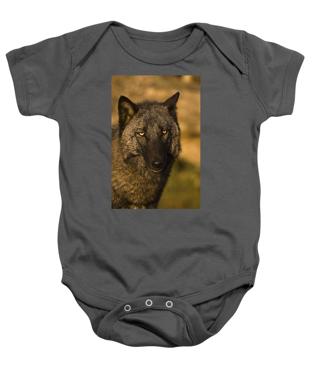 Wolf Baby Onesie featuring the photograph Tired by Jack Milchanowski