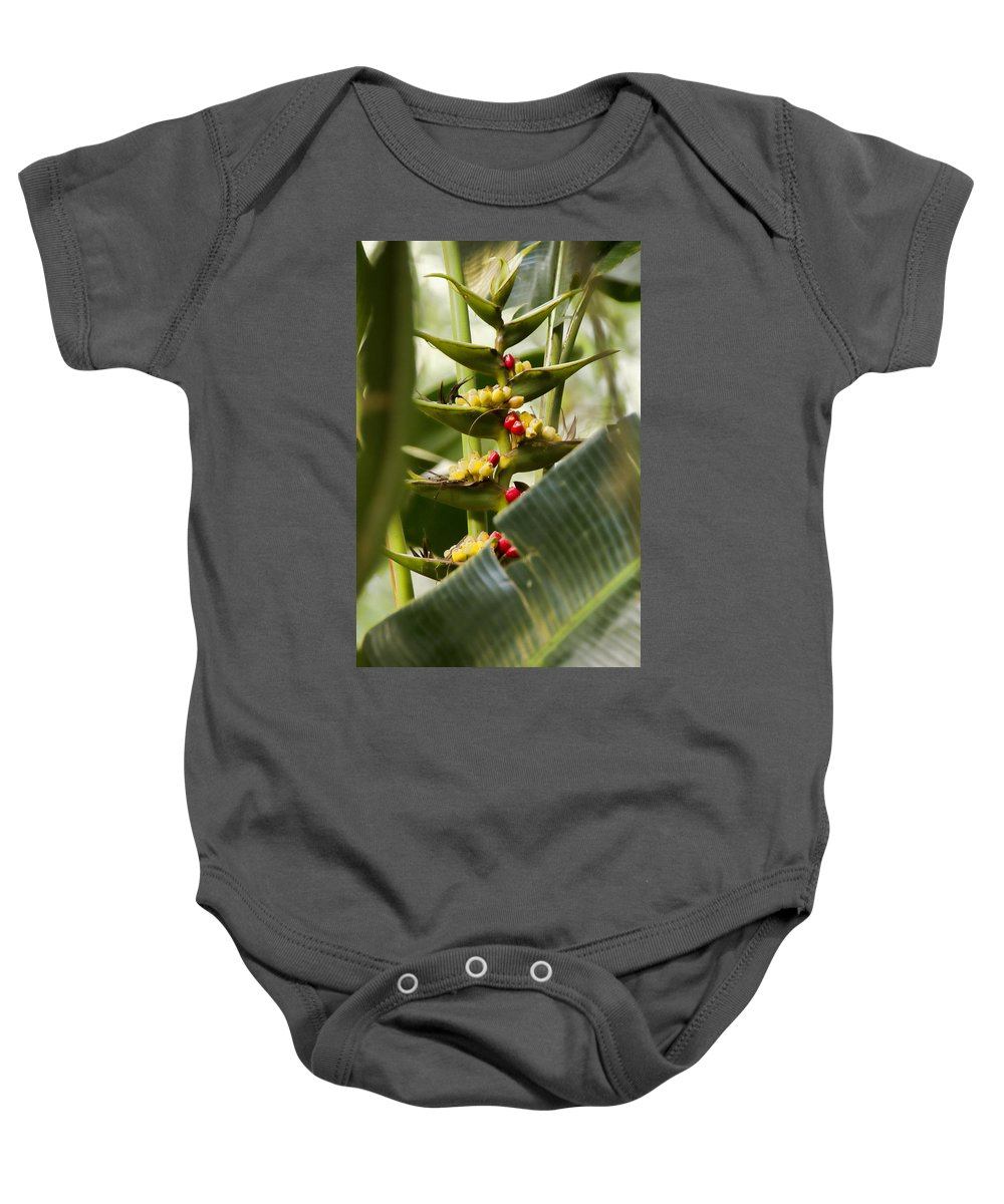 Tropical Baby Onesie featuring the photograph Tropical Fountain Of Seeds by Douglas Barnard