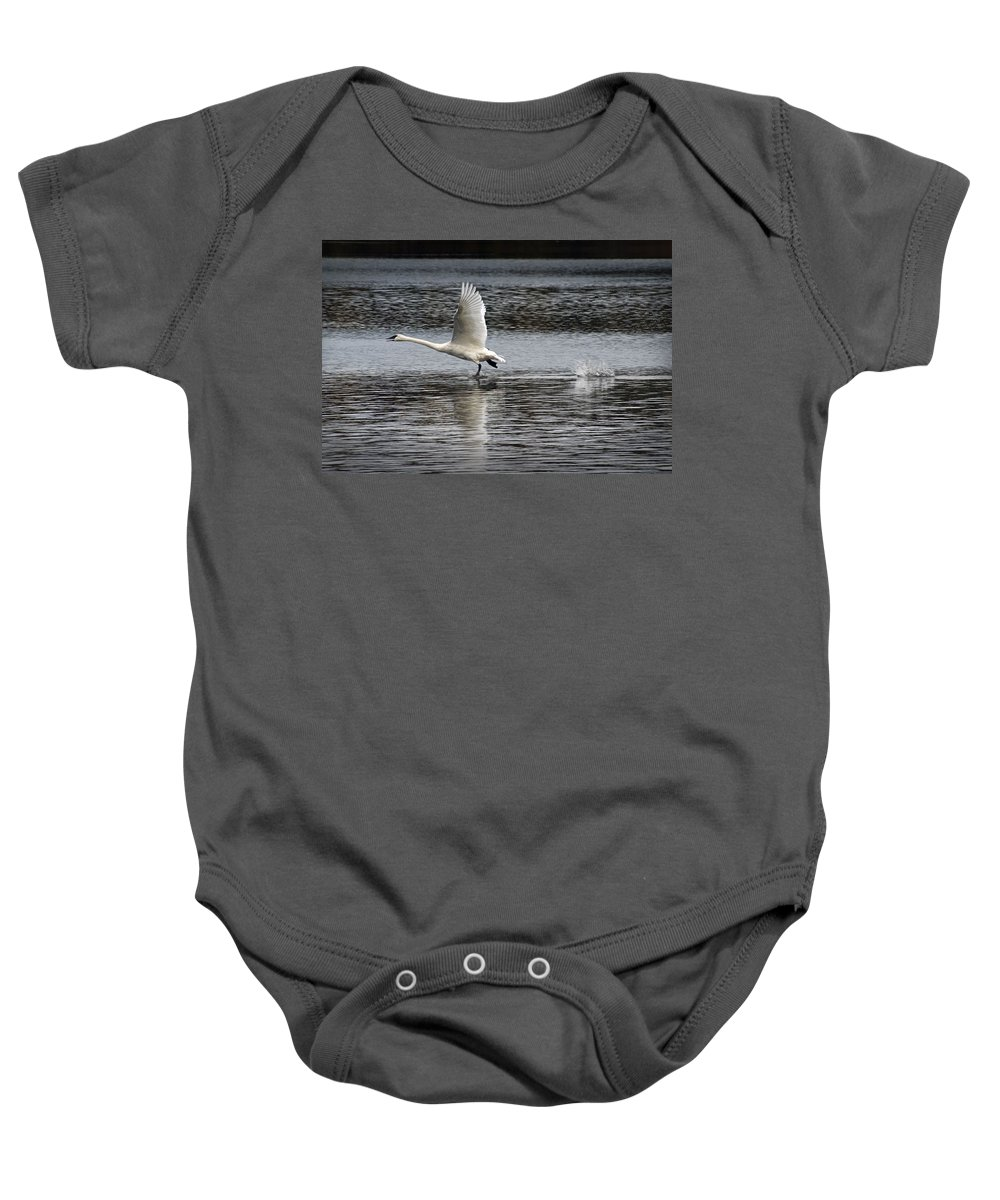 Art Baby Onesie featuring the photograph Trumpeter Swan Walking On Water by Randall Nyhof