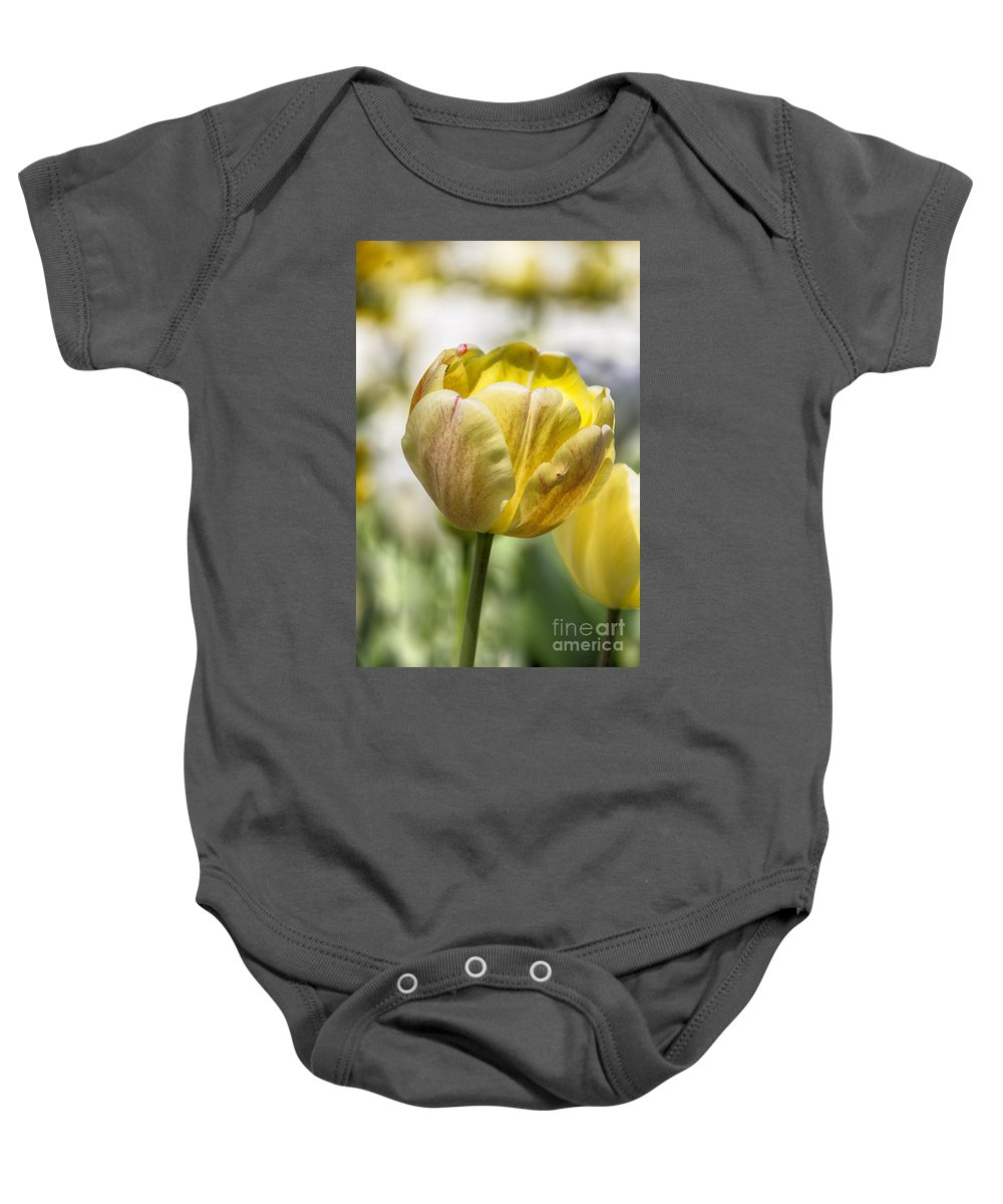Tulips Baby Onesie featuring the photograph Tulips At Dallas Arboretum V27 by Douglas Barnard
