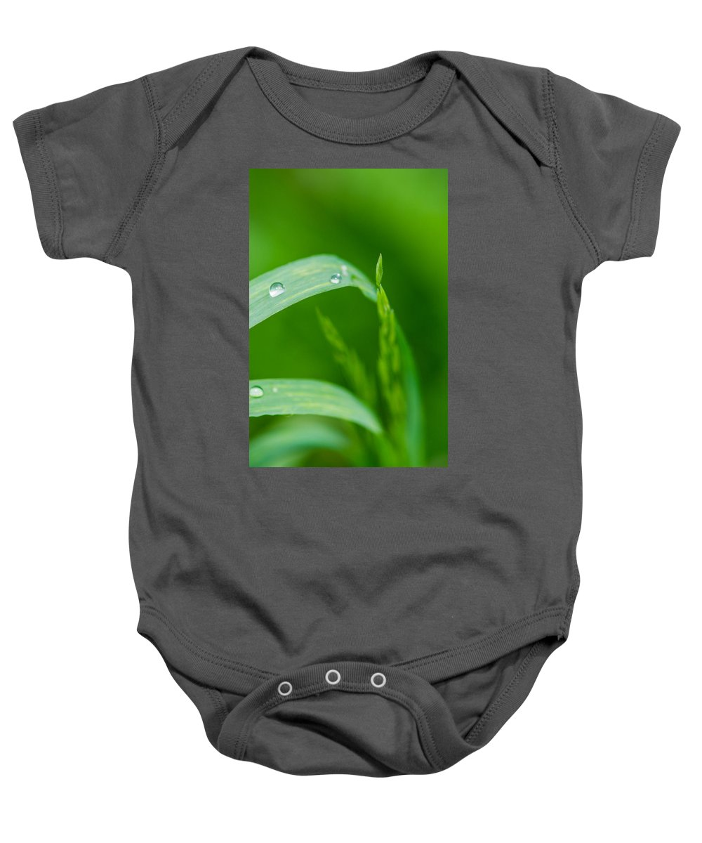 Agriculture Baby Onesie featuring the photograph Up To The Sun - Featured 3 by Alexander Senin