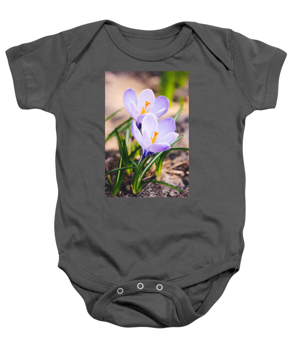 Crocus Baby Onesie featuring the photograph Vertical Crocus Flowers by Pati Photography