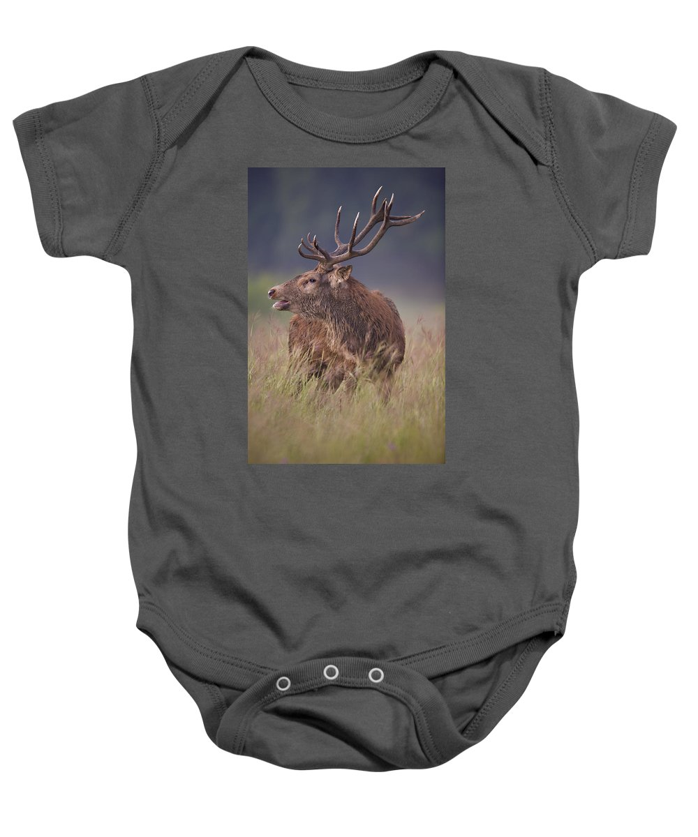 Red Deer Baby Onesie featuring the photograph Vocal by Jack Milchanowski