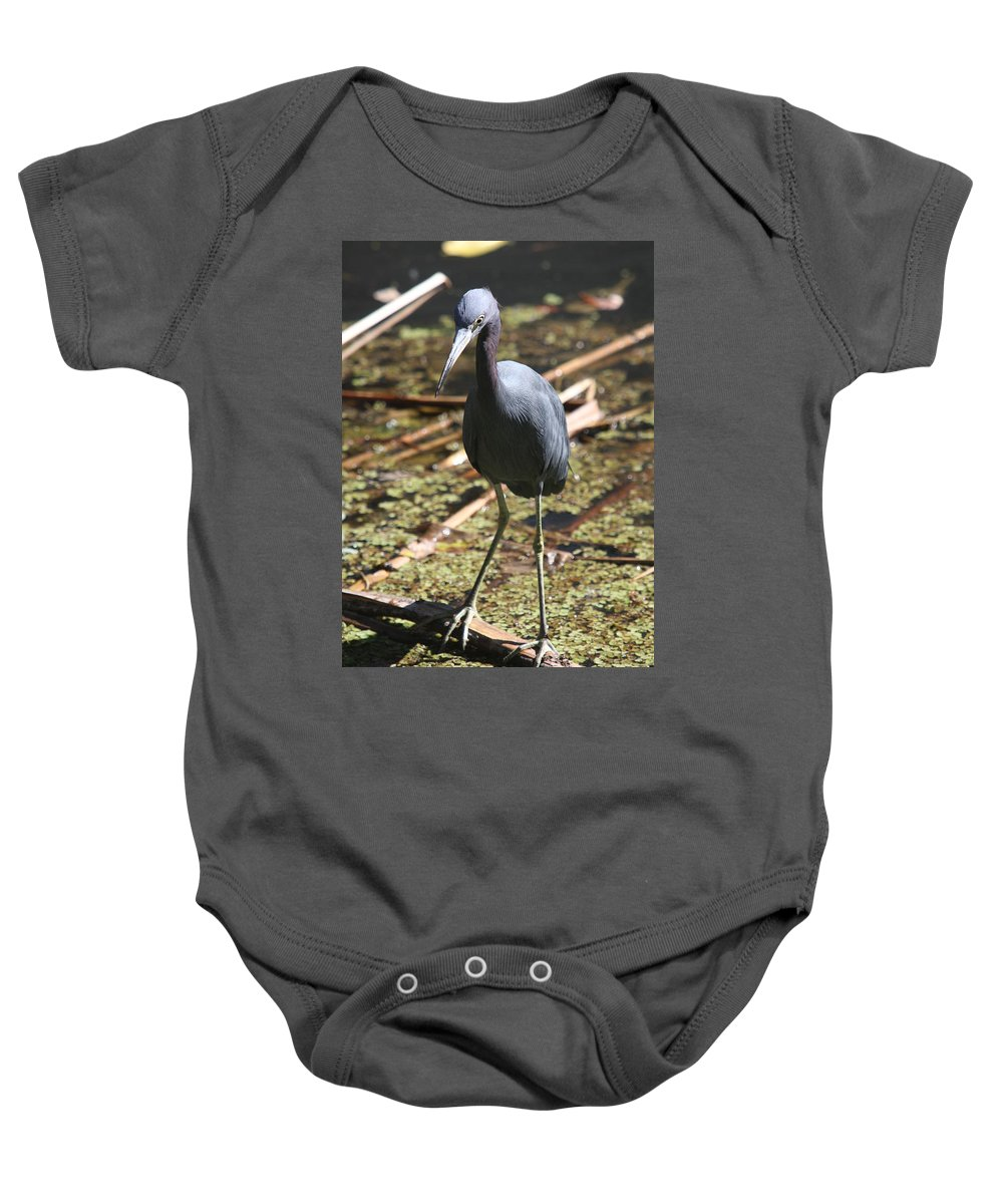 Heron Baby Onesie featuring the photograph Watchful Little Blue Heron by Christiane Schulze Art And Photography