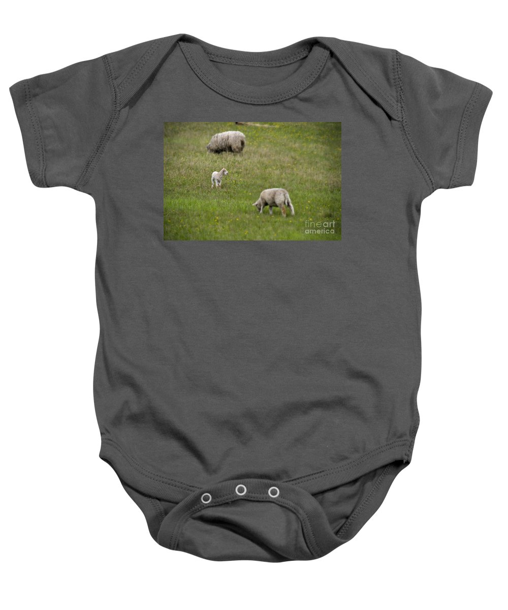Baby Animals Baby Onesie featuring the photograph Where Is Mom by David Arment
