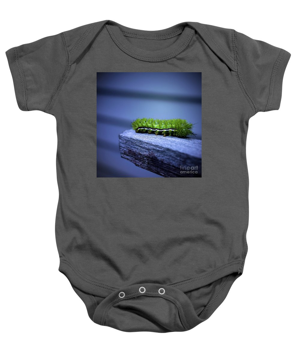 Catapillar Baby Onesie featuring the photograph Which Way To Go? by Trish Mistric