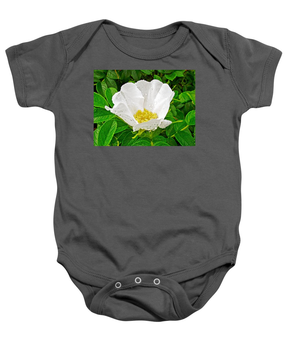 White Rose At Norris Point In Gros Morne National Park Baby Onesie featuring the photograph White Rose At Norris Point In Gros Morne National Park-newfoundland by Ruth Hager