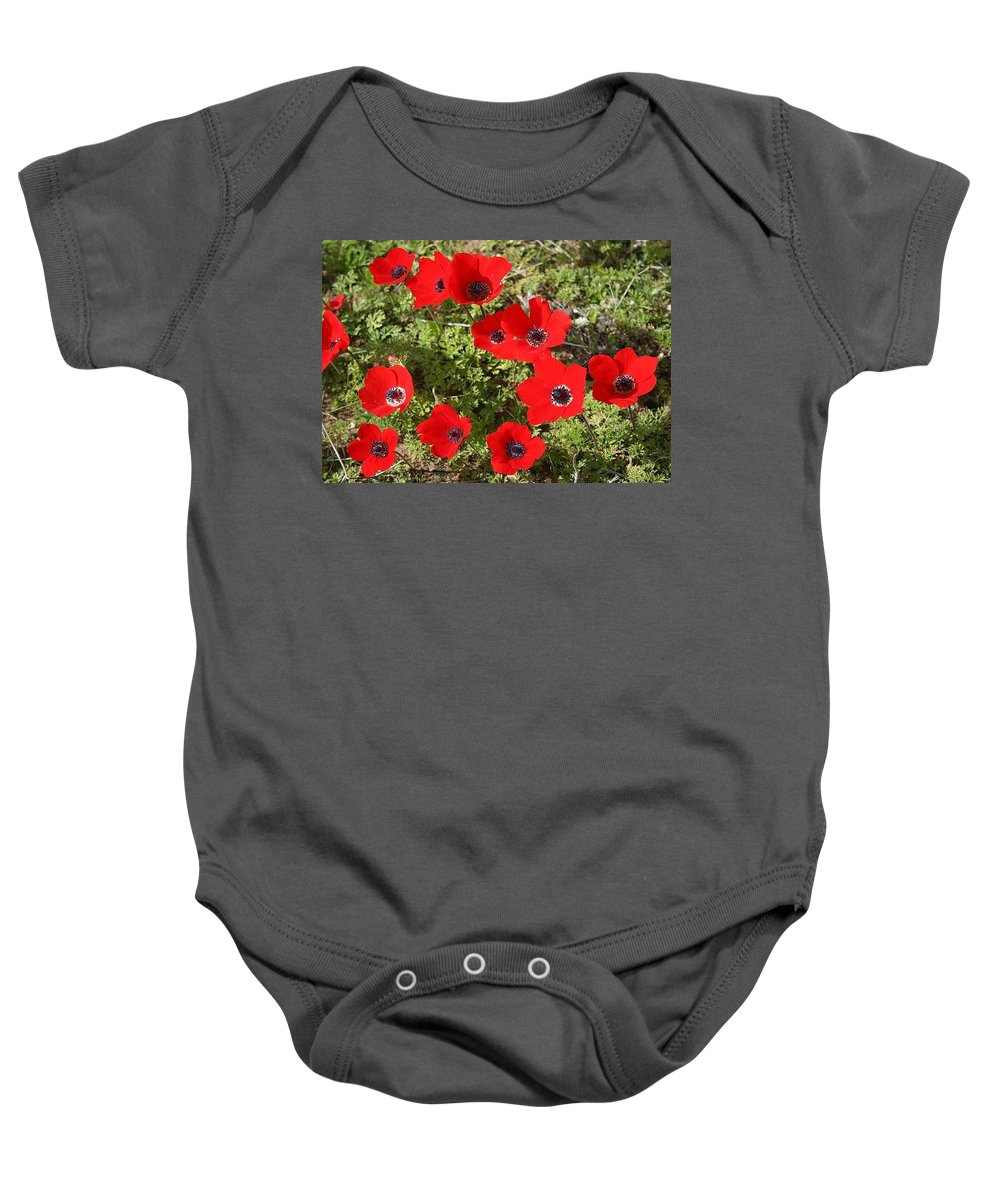 Anemone Coronaria Baby Onesie featuring the photograph Wild Anemone Flowers In A Spring Field by Taiche Acrylic Art