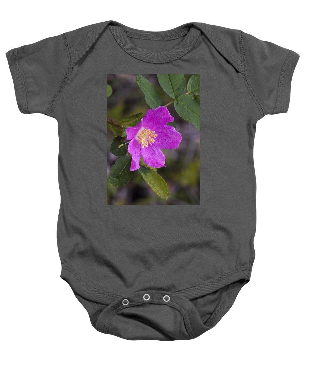 Doug Lloyd Baby Onesie featuring the photograph Wild Rose by Doug Lloyd