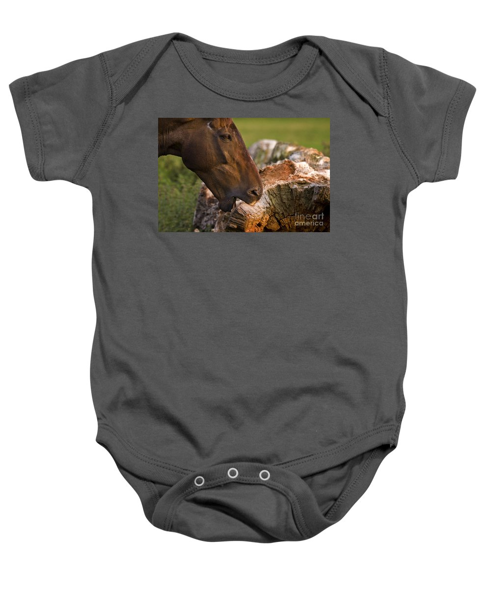 Pony Baby Onesie featuring the photograph Wood Eater by Angel Ciesniarska