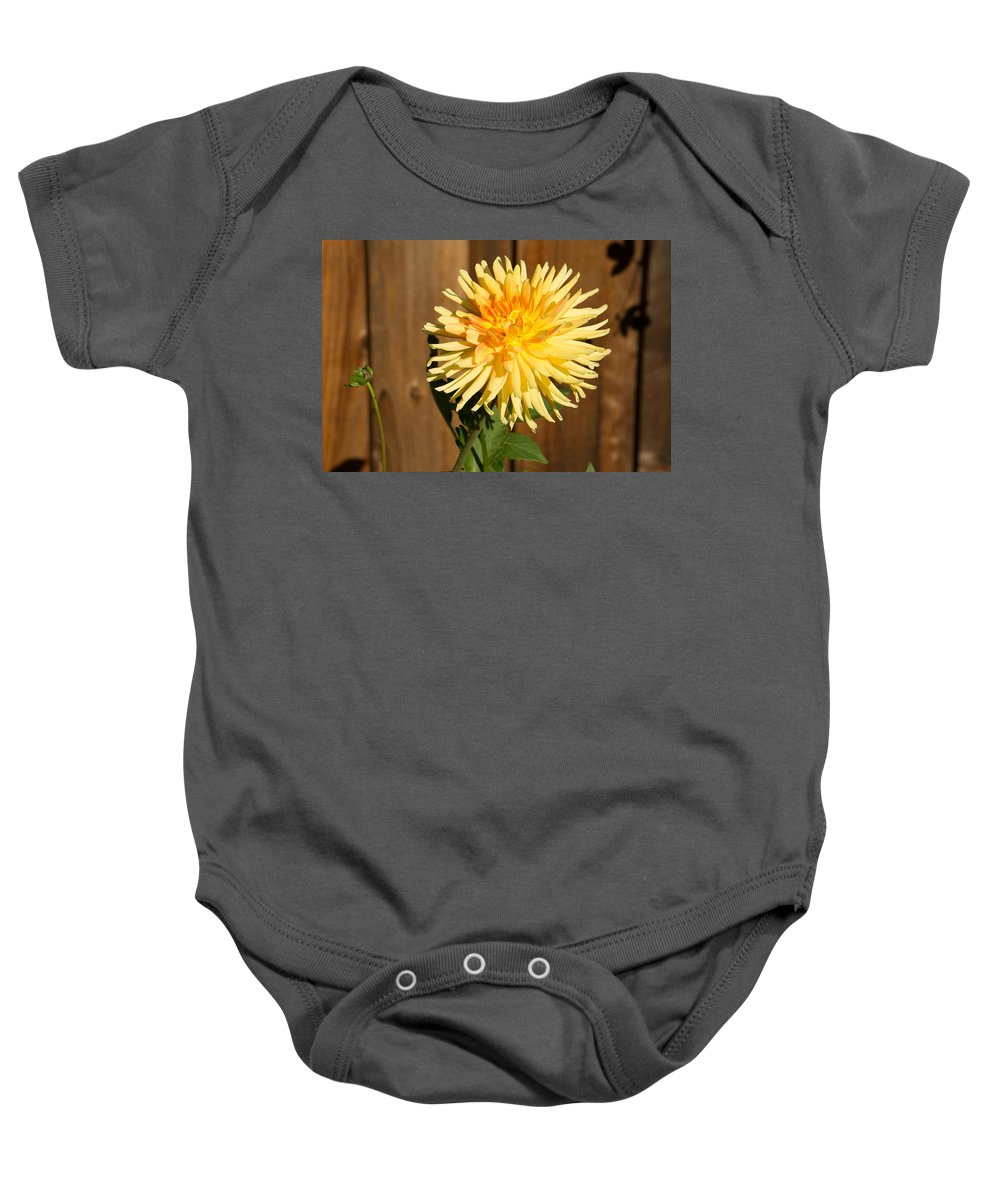 Yellow Baby Onesie featuring the photograph Yellow Dahlia by Diana Weir