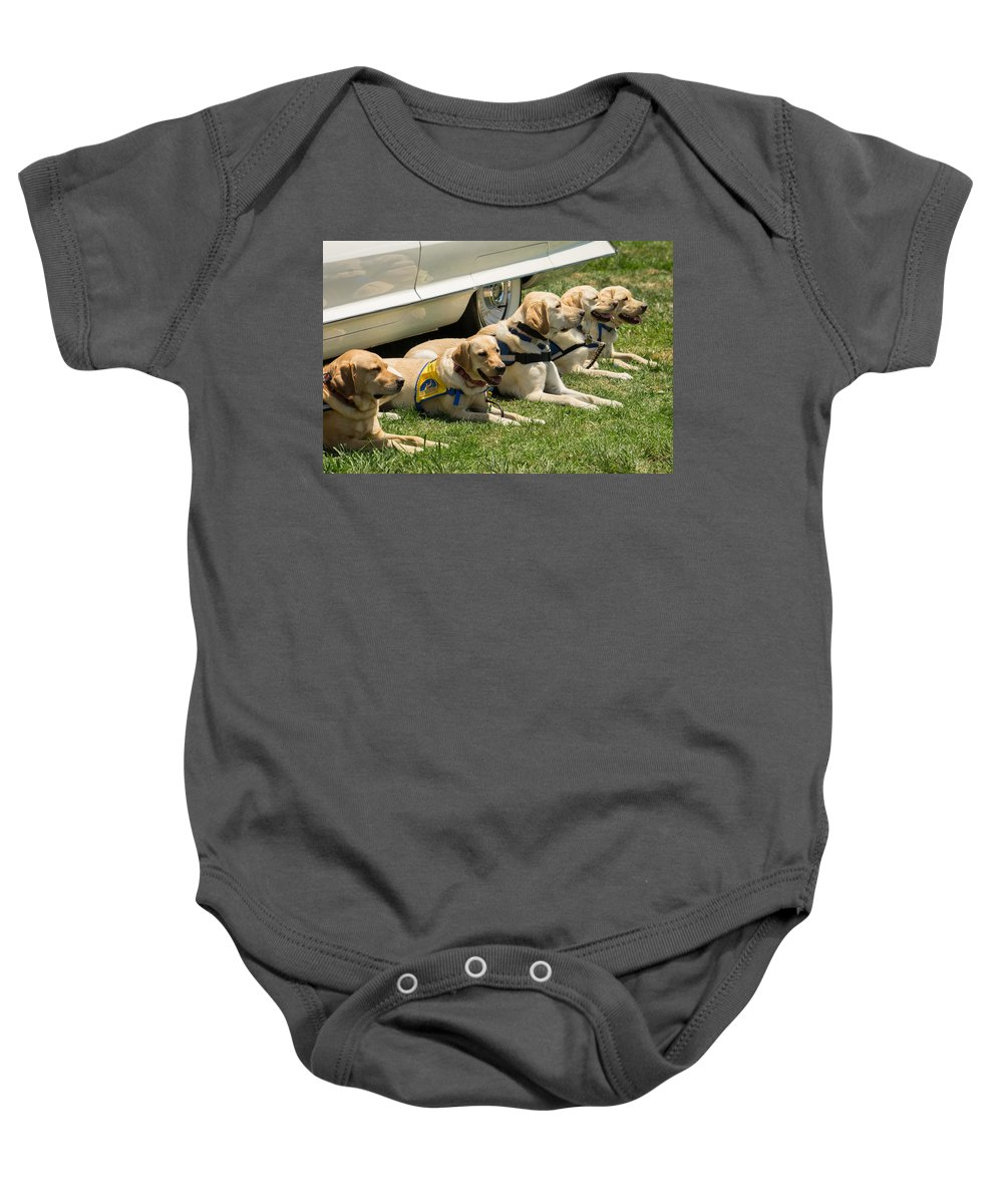 Dogs Baby Onesie featuring the photograph Yellow Labs In Training by Diana Weir