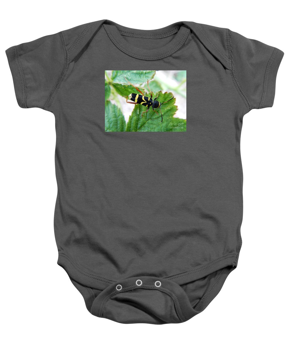 Wildlife Baby Onesie featuring the photograph Yellow Stripped Beetle by Loreta Mickiene