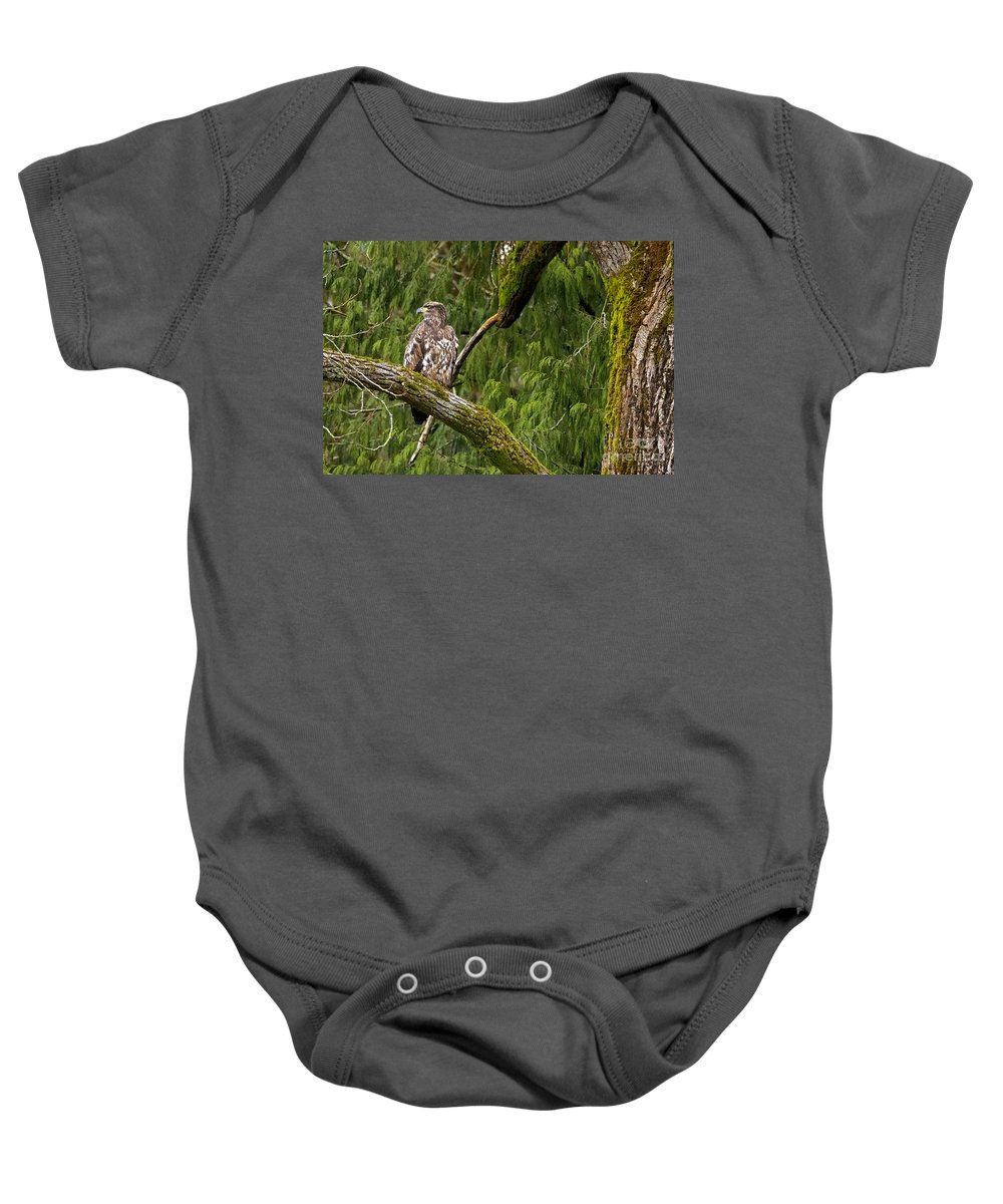 Bald Eagle Baby Onesie featuring the photograph Young Baldy 2 by Sharon Talson