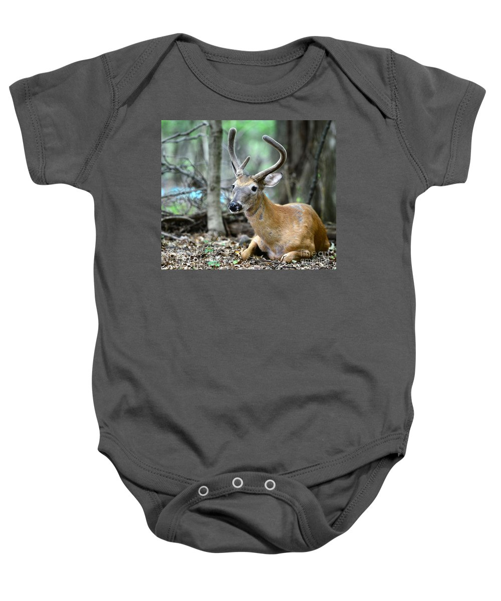 Velvet Buck At Rest Baby Onesie featuring the photograph Young Buck At Rest by Paul Ward