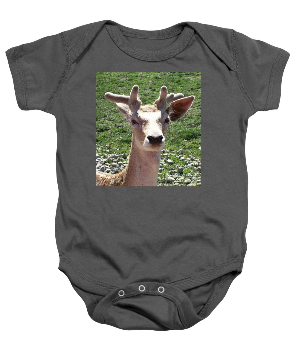 Nature Baby Onesie featuring the photograph Young Buck by Sara Raber