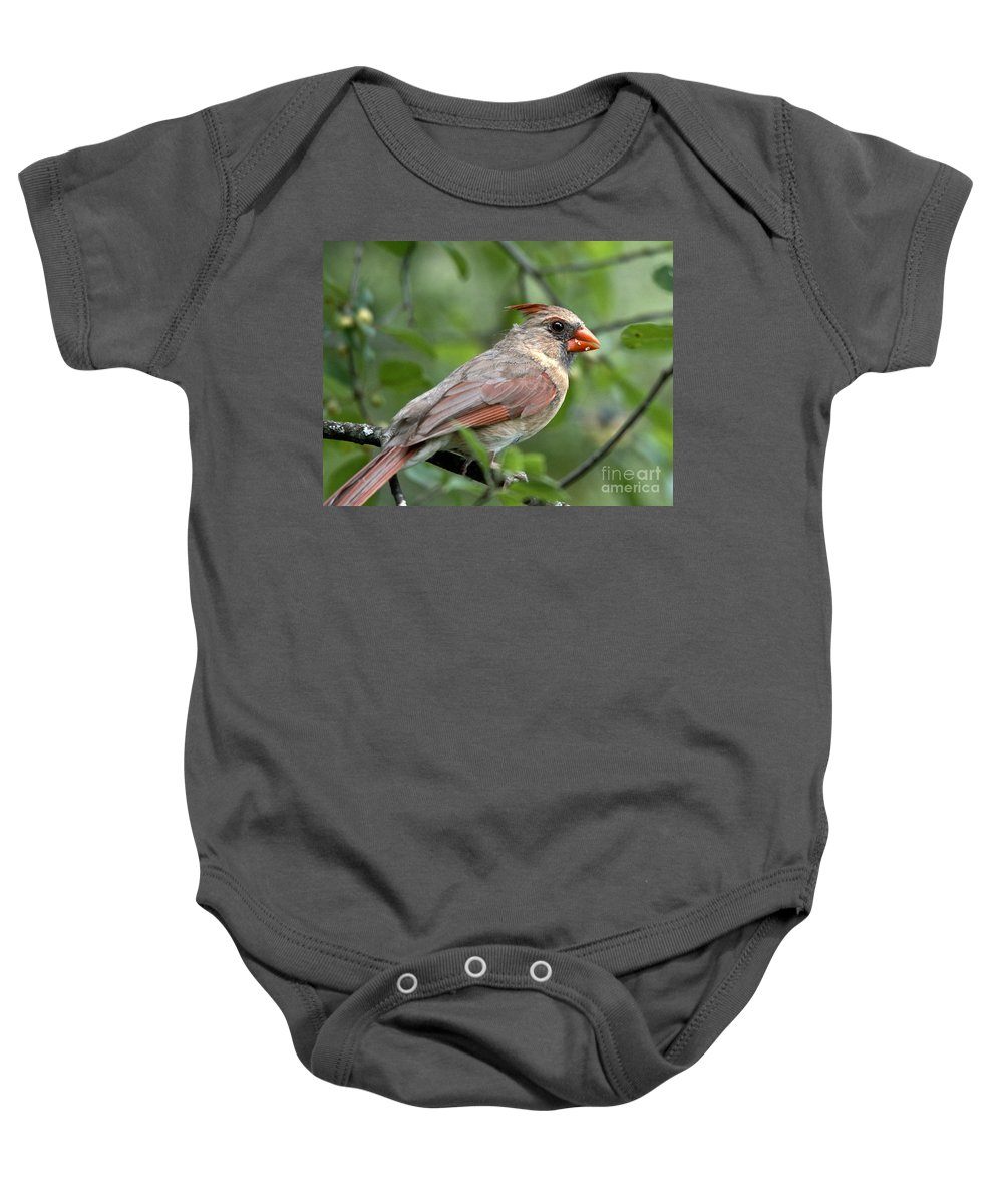 Cardinal Baby Onesie featuring the photograph Young Cardinal by Cheryl Baxter