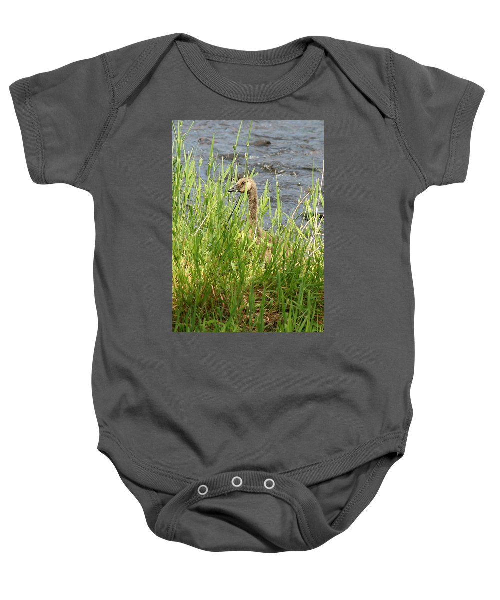 Geese Baby Onesie featuring the photograph Young Grazing Goose by Neal Eslinger