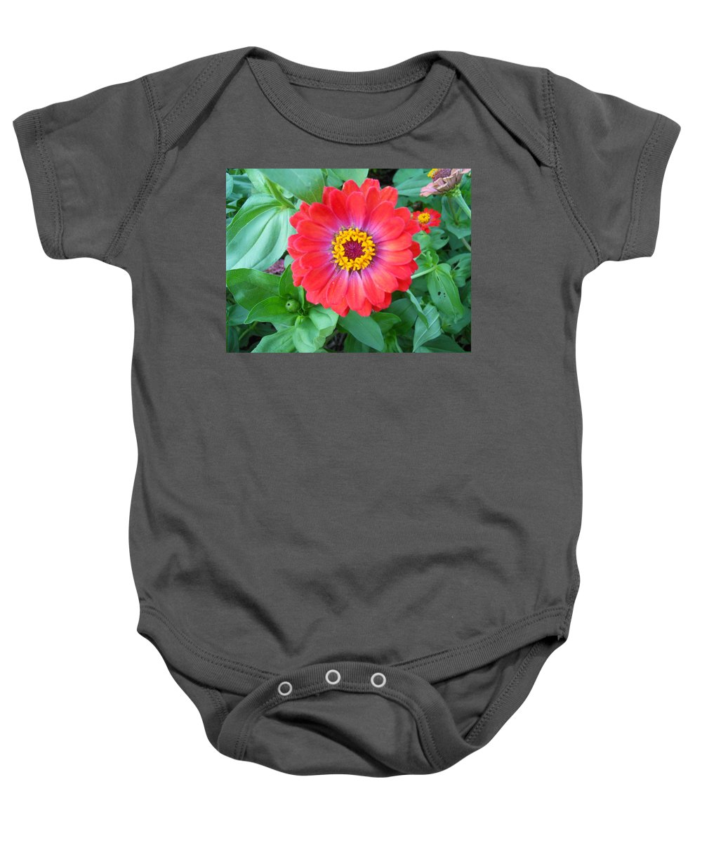 Flowers Baby Onesie featuring the photograph Zinnia by Coleen Harty