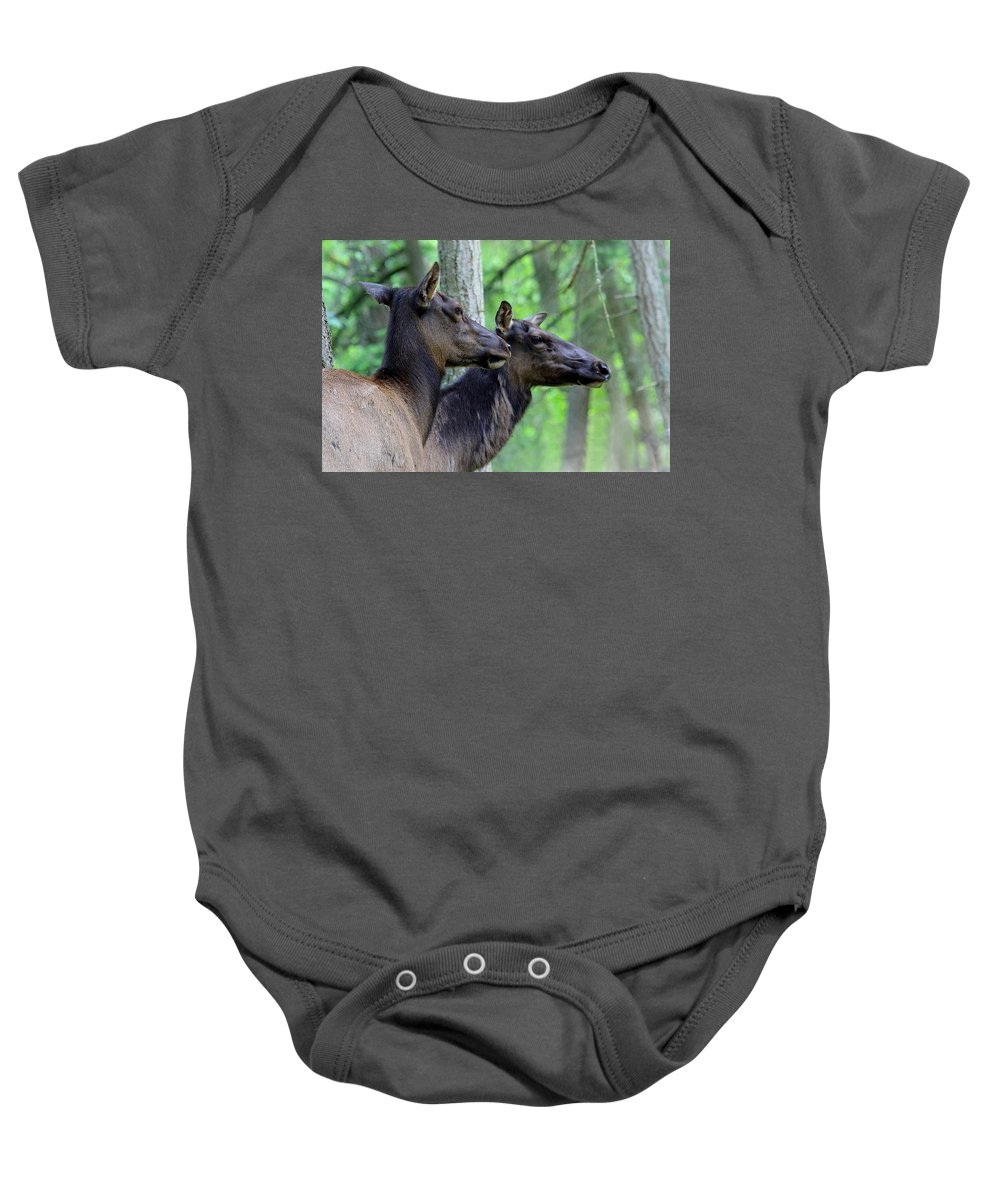 Cow Elk Baby Onesie featuring the photograph Elk In The Forest by Steve McKinzie