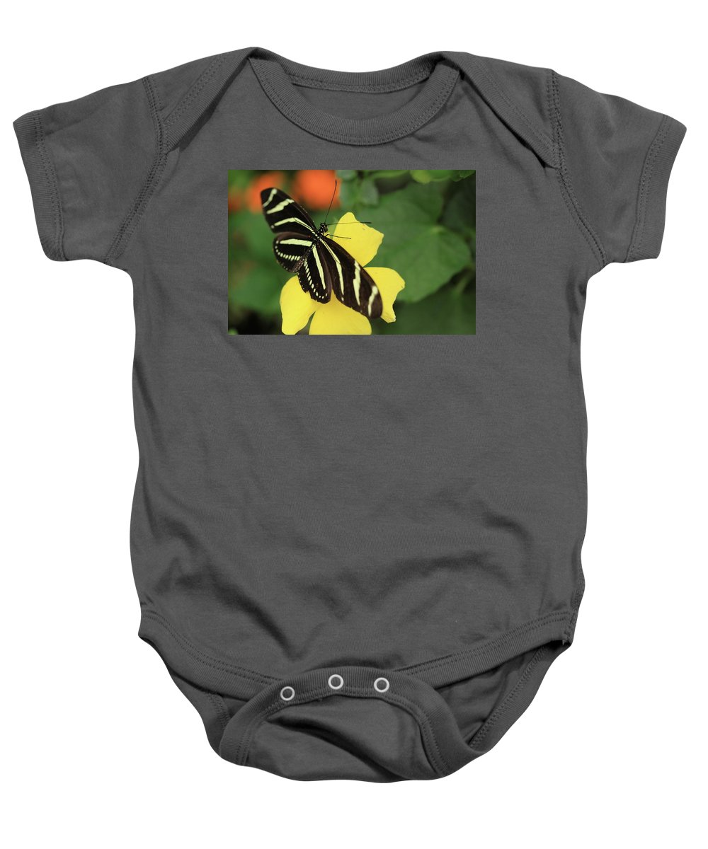 Flowers Baby Onesie featuring the photograph Zebra Longwing by Rick Berk
