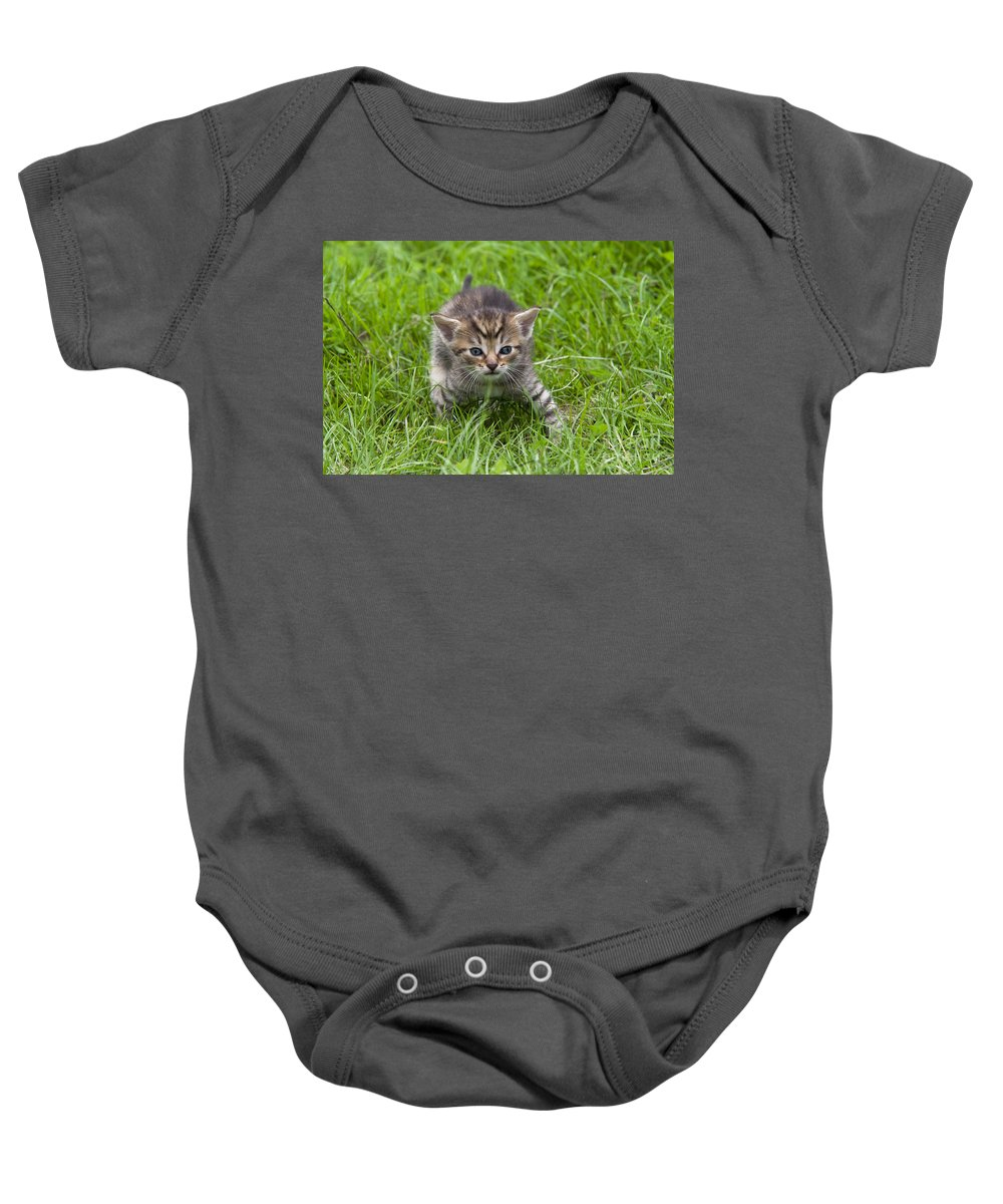 Adorable Baby Onesie featuring the photograph Small Kitten In The Grass by Michal Boubin