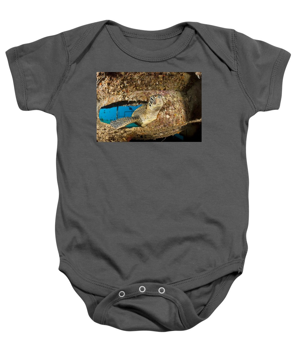 Animal Baby Onesie featuring the photograph Green Sea Turtle by Dave Fleetham - Printscapes