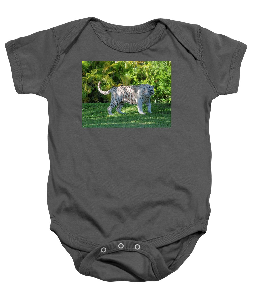 White Bengal Tiger Wildlife Baby Onesie featuring the photograph 35- White Bengal Tiger by Joseph Keane