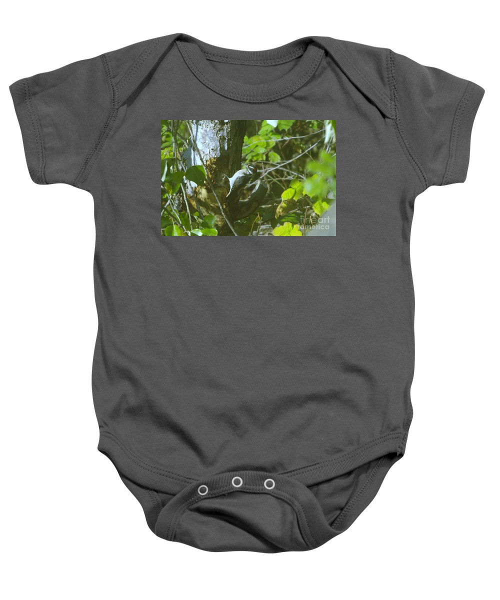 Birds Baby Onesie featuring the photograph A Busy Woodpecker by Jeff Swan