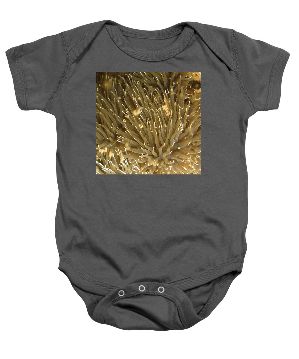 Sea Anemone Baby Onesie featuring the photograph Alien Life Form by Paul Ward